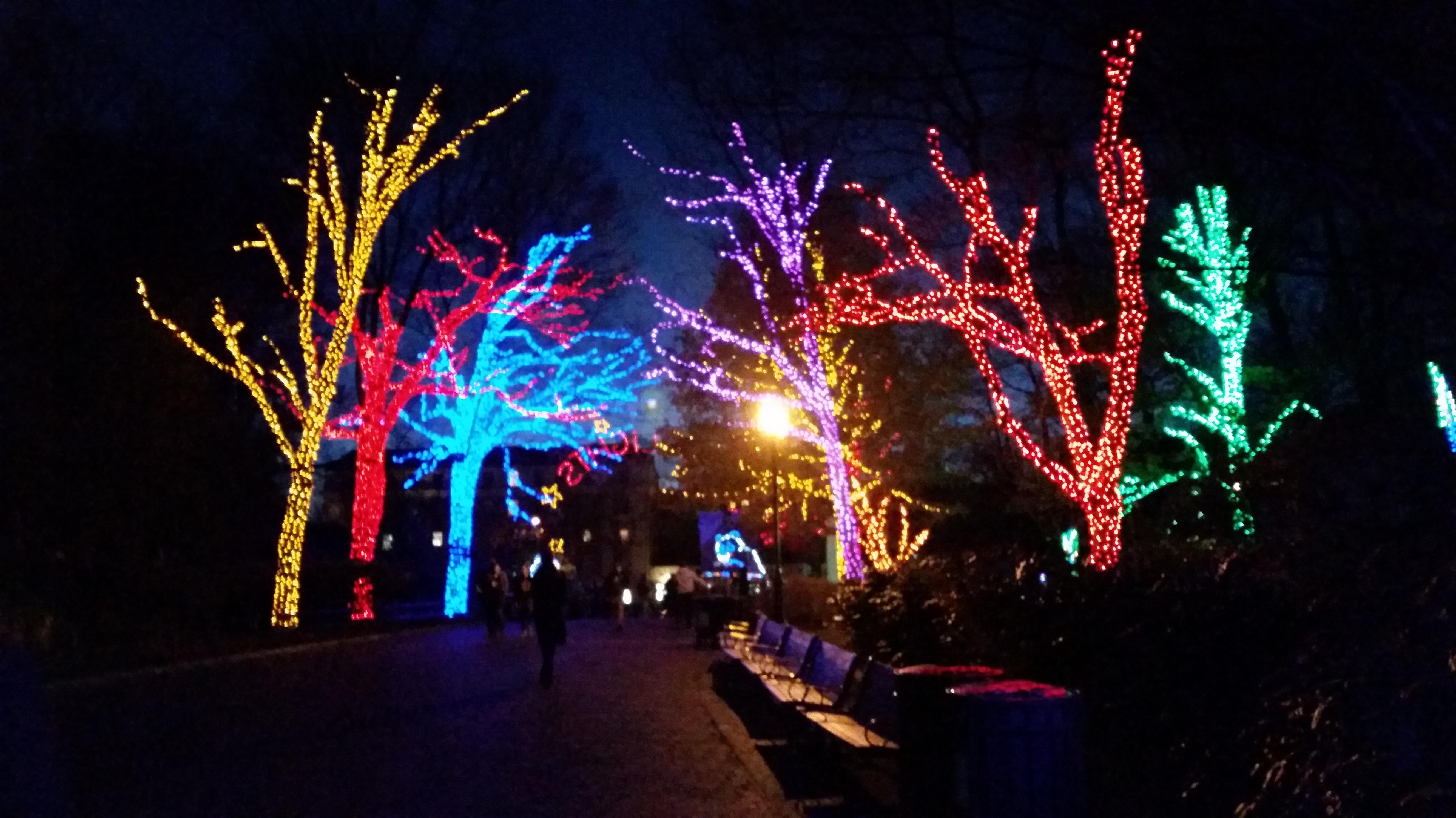 Zoo Lights Dc